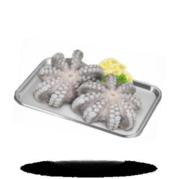 Octopus Blume