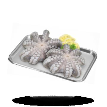 Oktopus-Blume