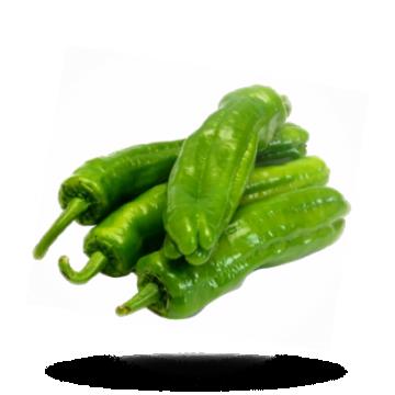 Paprika Ucburun grün